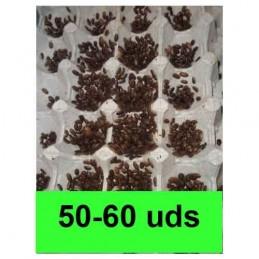 50-60 microblapticas