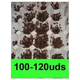 100-120 microblapticas