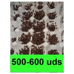 500-600 microblapticas