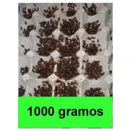 1kg microblapticas