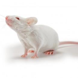 25 ratones destetados...