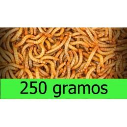250gr Tenebrio Molitor