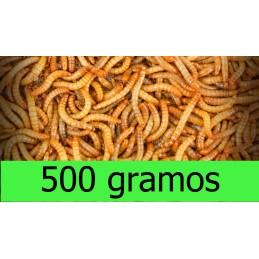 500gramos Tenebrio Molitor