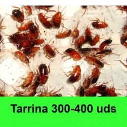 300-400uds Cucaracha roja...