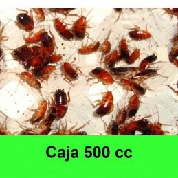 1/2 Litro Cucaracha roja...