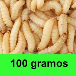 100 gramos gusanos de la miel