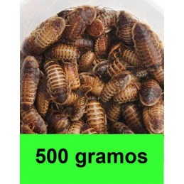 1/2 kg Blaptica Dubia medianas
